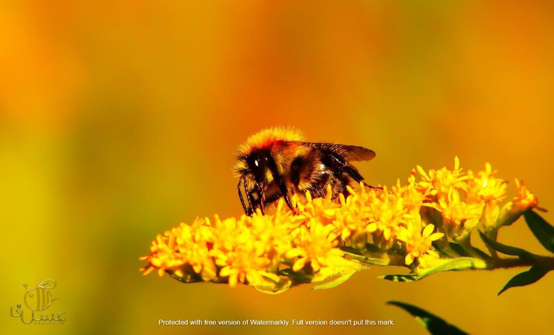 مهم ترین آنزیمهای عسل برای سلامتی